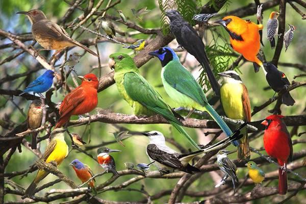 Birding Our Backyard